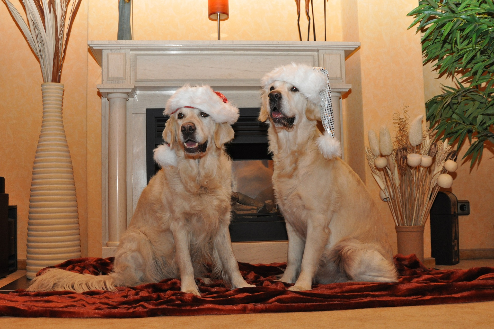 How to sell Christmas cards and birthday cards from pets on eBay
