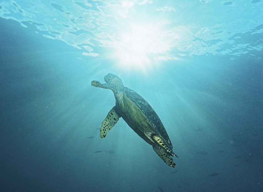 The Turtle Trader strategy that made 80% returns, four years in a row